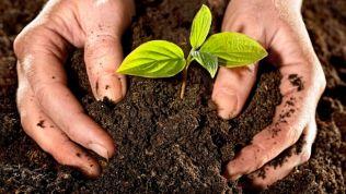 Kleines Pflänzchen wird in Erde eingegraben