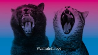 Animate Europe-Grafik