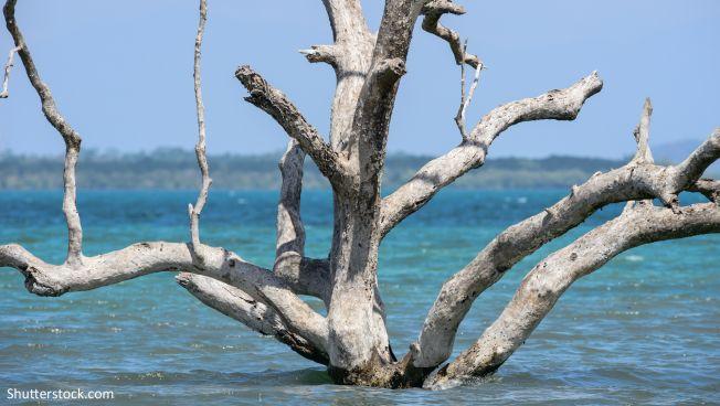 Die Freien Demokraten fordern ein Umdenken in der Klimaschutzpolitik