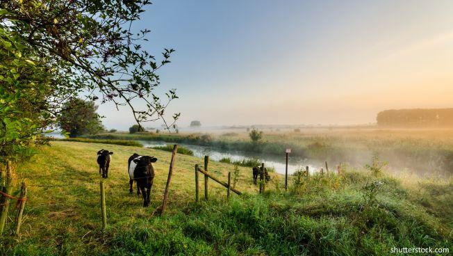 Landwirtschaft, Klimaschutz, Niedersachsen, FDP, Freie Demokraten