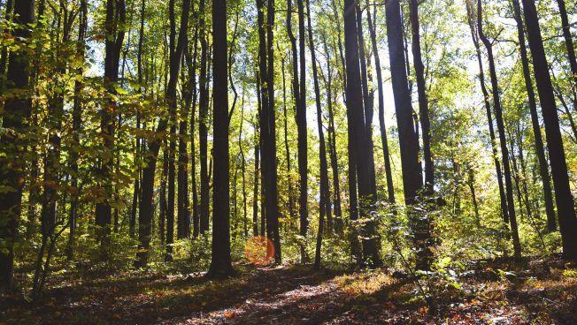 Wald, Bäume, CO2, Klima