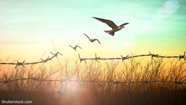 Zaun, Vögel